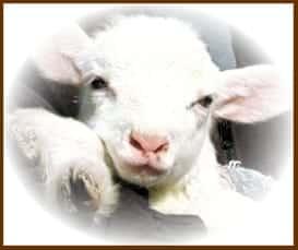 Un Nuovo Mondo: Giornata mondiale pr l'abolizione della carne - 31 gennaio