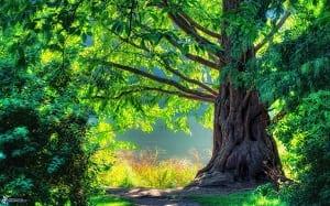 Effetto Maharishi - albero 2