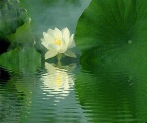 Mantra OM Fiore di Loto