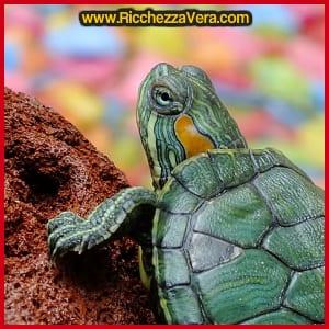 Feng Shui tartaruga