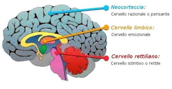 teoria dei tre cervelli